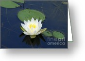 Wildflowers Greeting Cards - Light from Within  Greeting Card by Neal  Eslinger