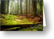 Forest Floor Photo Greeting Cards - Light in the Forest Greeting Card by Idaho Scenic Images Linda Lantzy