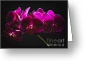Phalaenopsis Orchid Greeting Cards - Light Painted Orchids Greeting Card by George Oze