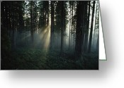 Large Group Greeting Cards - Light Passes Through A Clearcut Done Greeting Card by James P. Blair