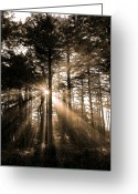 B.c Greeting Cards - Light Through the Forest Greeting Card by David  Naman