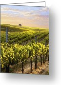 Vineyard Digital Art Greeting Cards - Lighted Vineyard Greeting Card by Sharon Foster