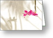 Stamen Greeting Cards - Light..Flower..Shadow 2 Greeting Card by Kaye Menner