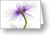 Flora Photo Greeting Cards - Lightness Greeting Card by Kristin Kreet