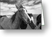 Horse Pyrography Greeting Cards - Lightning Greeting Card by Jimmy Bruch
