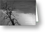 Unusual Lightning Greeting Cards - Lightning Tree Silhouette 38 Black and White Greeting Card by James Bo Insogna