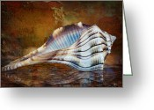 Sanibel Island Greeting Cards - Lightning Whelk Seashell Greeting Card by Bonnie Barry