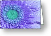 Daisies Photos Greeting Cards - Lights in purple flower Greeting Card by Kristin Kreet