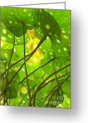 Leopard Greeting Cards - Ligularia Tussilaginea Greeting Card by Carlos Caetano