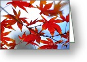Red Maple Greeting Cards - Like Autumn Butterflies in the Breeze Greeting Card by Kaye Menner