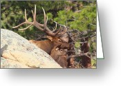 Rut Greeting Cards - Like Father - Like Son Greeting Card by Shane Bechler