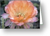 Chevalier Greeting Cards - Like the flower waiting to bloom Greeting Card by Elizabeth Chevalier