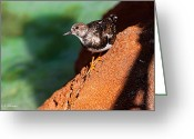 Christopher Holmes Greeting Cards - Lil Bird Greeting Card by Christopher Holmes