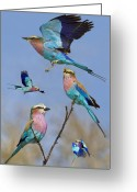 Nature Collage Greeting Cards - Lilac-breasted Roller Collage Greeting Card by Basie Van Zyl
