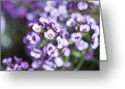 Elena Kotliarker Greeting Cards - Lilac Greeting Card by Elena Kotliarker