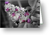 Fragrant Flowers Greeting Cards - Lilac Flowers Greeting Card by Jai Johnson