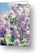  Color  Colorful Greeting Cards - Lilac Greeting Card by Kristin Kreet