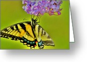 Feeding Greeting Cards - Lilac Perched Greeting Card by Emily Stauring