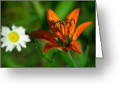 Aster  Greeting Cards - Lili and Daisy  Greeting Card by Jakub Sisak