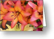 Pollen Greeting Cards - Lilies background Greeting Card by Jane Rix