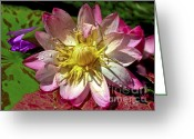 Lilies Greeting Cards - Lilies No. 42 Greeting Card by Anne Klar