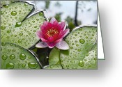 Dew Drops Greeting Cards - Lilies No. 5 Greeting Card by Anne Klar