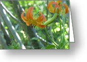 Estephy Sabin Figueroa Greeting Cards - Lilies on a Sunny Morning Greeting Card by Estephy Sabin Figueroa