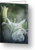 Lilies Flowers Greeting Cards - Lilies Through A Rainy Window Greeting Card by Diane Schuster