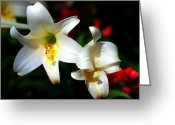 Lilium Greeting Cards - Lilium longiflorum flower Greeting Card by Mingqi Ge