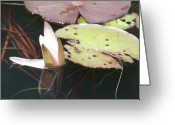 Lilly Pad Greeting Cards - Lillly Pad Greeting Card by Emeraldcoast Gallery