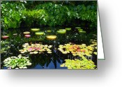 Flowers Miami Greeting Cards - Lilly Garden Greeting Card by Carey Chen