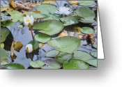 Lilly Pad Greeting Cards - Lilly Hopping Greeting Card by Terry Anderson