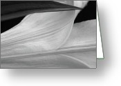 Delicacy Greeting Cards - Lilly in B and W Greeting Card by Sean Holmquist