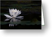 Lilly Pads Photo Greeting Cards - Lilly of the water Greeting Card by Michel Soucy
