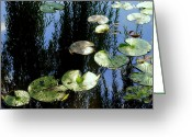 Water Lilly Greeting Cards - Lilly Pad Reflection Greeting Card by Robert Harmon