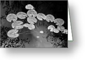 Lilly Pads Photo Greeting Cards - Lilly Pads Fakahtchee Strand Greeting Card by Jim Dohms