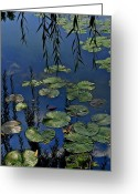 Toad Greeting Cards - Lilly Pads Greeting Card by Robert Harmon