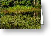 Lilly Pad Greeting Cards - Lilly Pond Greeting Card by Andrew Bear