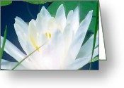 Warm Looking Flower Greeting Cards - Lily Essence Greeting Card by Debra     Vatalaro