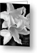 Black And White Flower Greeting Cards - Lily Flowers Black and White Greeting Card by Jennie Marie Schell
