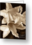Lilies Greeting Cards - Lily Flowers in Sepia Greeting Card by Jennie Marie Schell