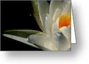 Wildflowers Greeting Cards - Lily in Dark Water   Greeting Card by Neal  Eslinger
