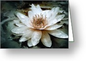 Romantic Mixed Media Greeting Cards - Lily Light Greeting Card by Joel Payne