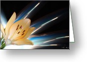 Lightpaint Greeting Cards - Lily Love Greeting Card by Andrew Nourse