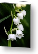 Garden Pyrography Greeting Cards - Lily of the Valley Greeting Card by Bobbi Smith