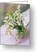 Indoors Home Greeting Cards - Lily Of The Valley (convallaria Majalis) Greeting Card by Erika Craddock