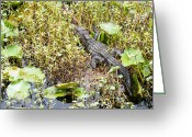 Lizard Greeting Cards - Lily Pad Alligator Greeting Card by Scott Hansen