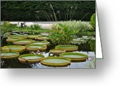 Marvelous Greeting Cards - Lily Pad Garden Greeting Card by Robert Harmon