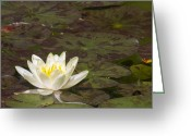 Water Lilly Greeting Cards - Lily Pad Greeting Card by Michael Peychich
