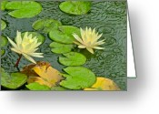 Lily Pad Greeting Cards - Lily Pad Pond Petals Greeting Card by Richard Mansfield